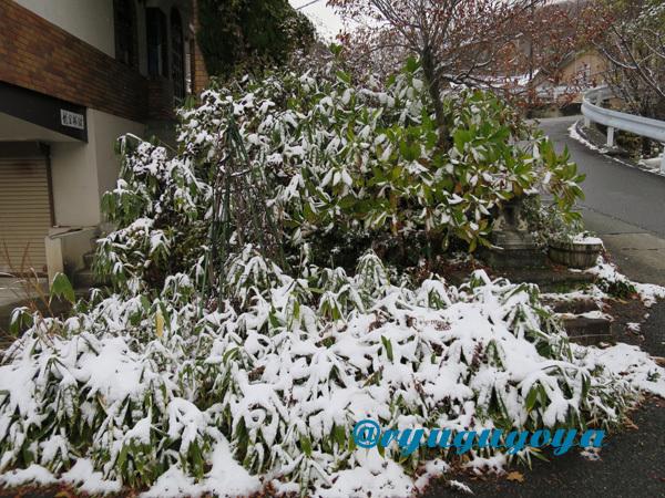20141119yukinosasa.jpg